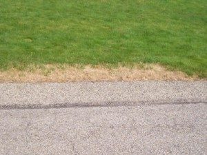 salt damage on lawn