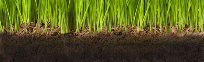 lawn-thatch