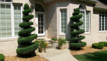shrub-fert