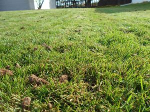 lawn dethatch Green Bay