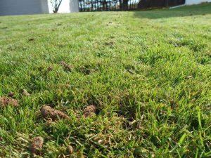 lawn dethatch Green Bay