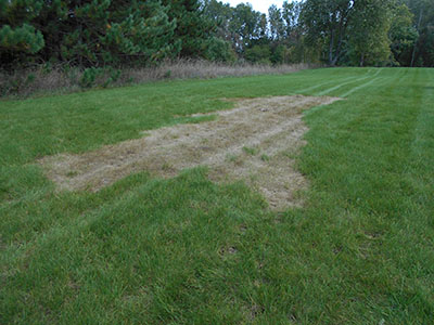 Brown Grass Lawn Damage Green Bay