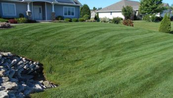 de-thatching lawn