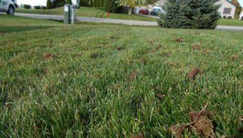 lawn dethatch