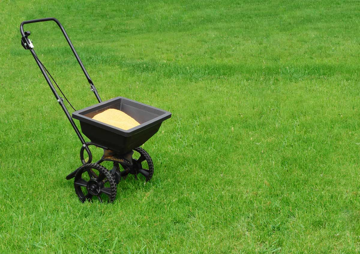 spread fertilizer to fertilize lawn
